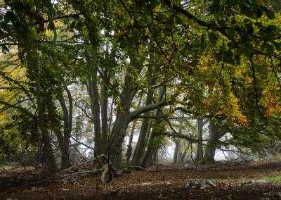 Herbstwald bei Donnstetten