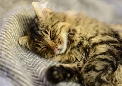 Sunny schläft