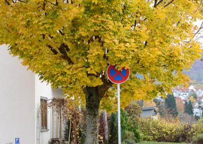 Halteverbot vor Herbstbaum