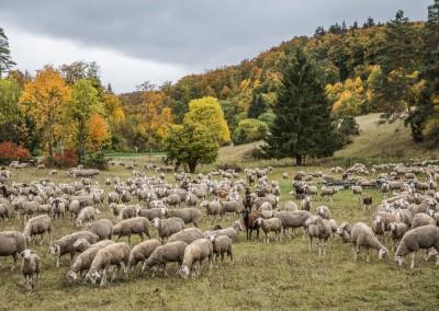 Herbst im Dezember auf der Schwäbischen Alb
