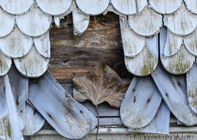 Efeu-Blatt in einer Schindel-Fassade