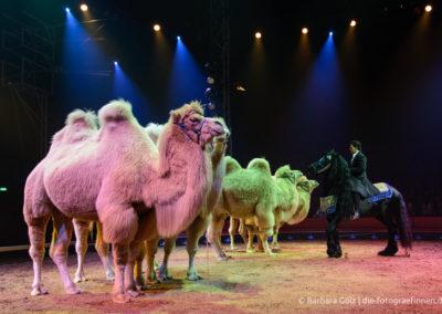 Maycol Errani vom Zirkus Knie mit seinen Kamelen